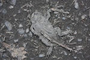 Bilder 23.04.2010 033