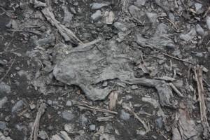 Bilder 23.04.2010 035