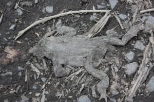Bilder 23.04.2010 054