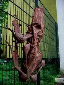 Frosch am Zaun