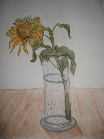 Schon wieder Sonnenblumen